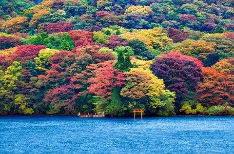 Khám phá Nhật với giá 9,9 triệu đồng