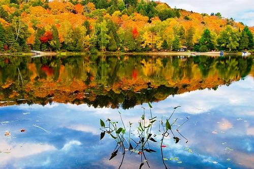 Algonquin trong mùa thu tuyệt mỹ | Cảnh Đẹp Blog