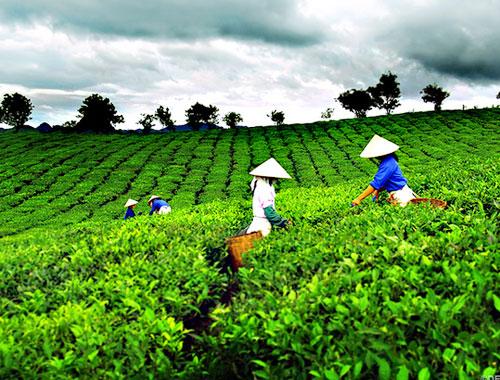 Hương sắc xứ trà tại festival lần thứ 2
