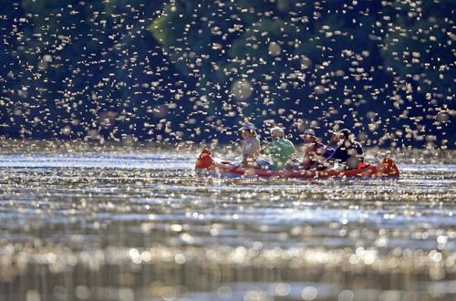 Khung cảnh thần tiên sông Tisza mùa phù du giao phối