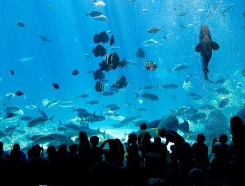 Bể cá Georgia lớn nhất thế giới