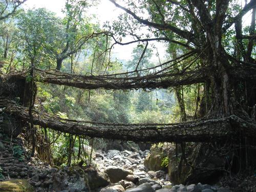 Shillong, thành phố yên bình trong lòng Ấn Độ