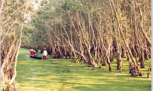 Ốc đảo xanh Gáo Giồng ở Đồng Tháp