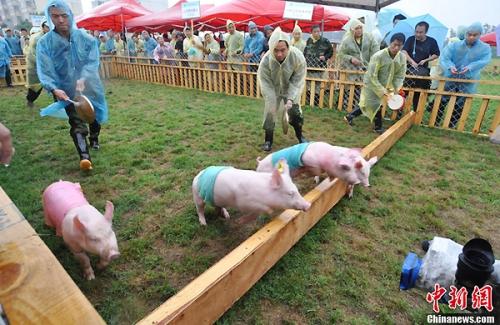 Lễ hội đua heo ở Trung Quốc