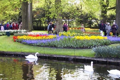 Thăm xứ sở 'nữ hoàng' hoa tulip