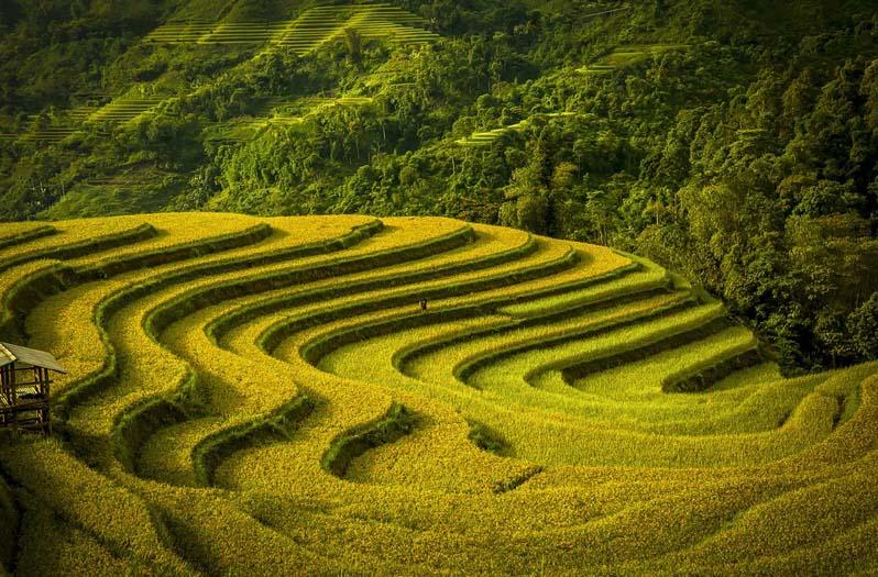 10 ảnh tuyệt đẹp của thế giới trong đó có ruộng bậc thang