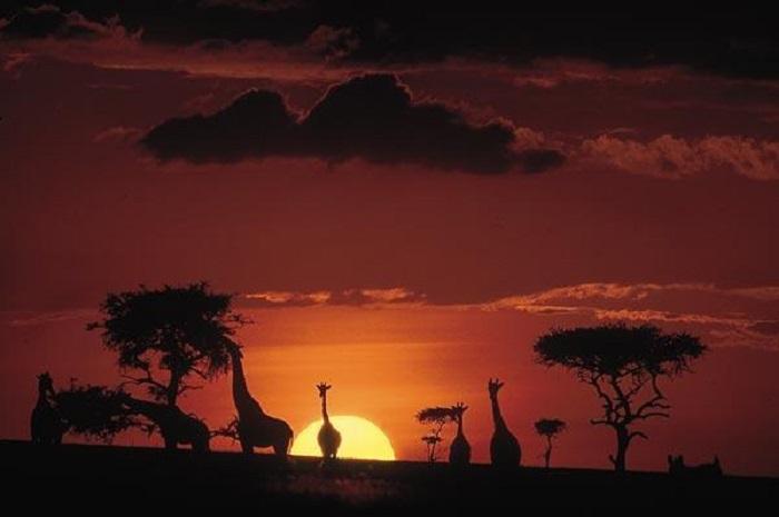 Gấp lại những trang sách, tôi đến châu Phi….