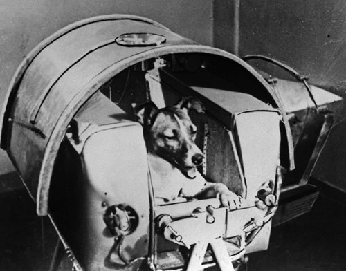 Câu chuyện buồn về Laika - chú chó đầu tiên bay vào vũ trụ