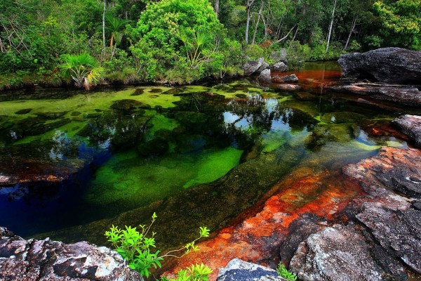 Chùm ảnh Cano Cristales, dòng sông ngũ sắc ấn tượng nhất thế giới