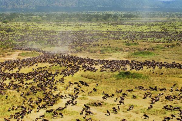 Kenya hoang dã - Kỳ 3: Cuộc chiến sinh tồn trên thảo nguyên