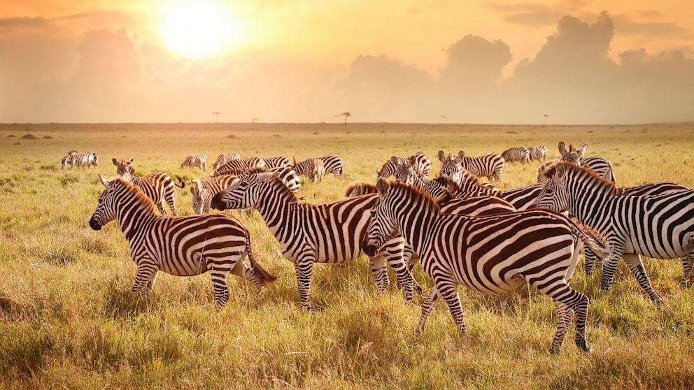 Kenya hoang dã - Kỳ 4: Bức tranh hồng hạc ở Tanzania