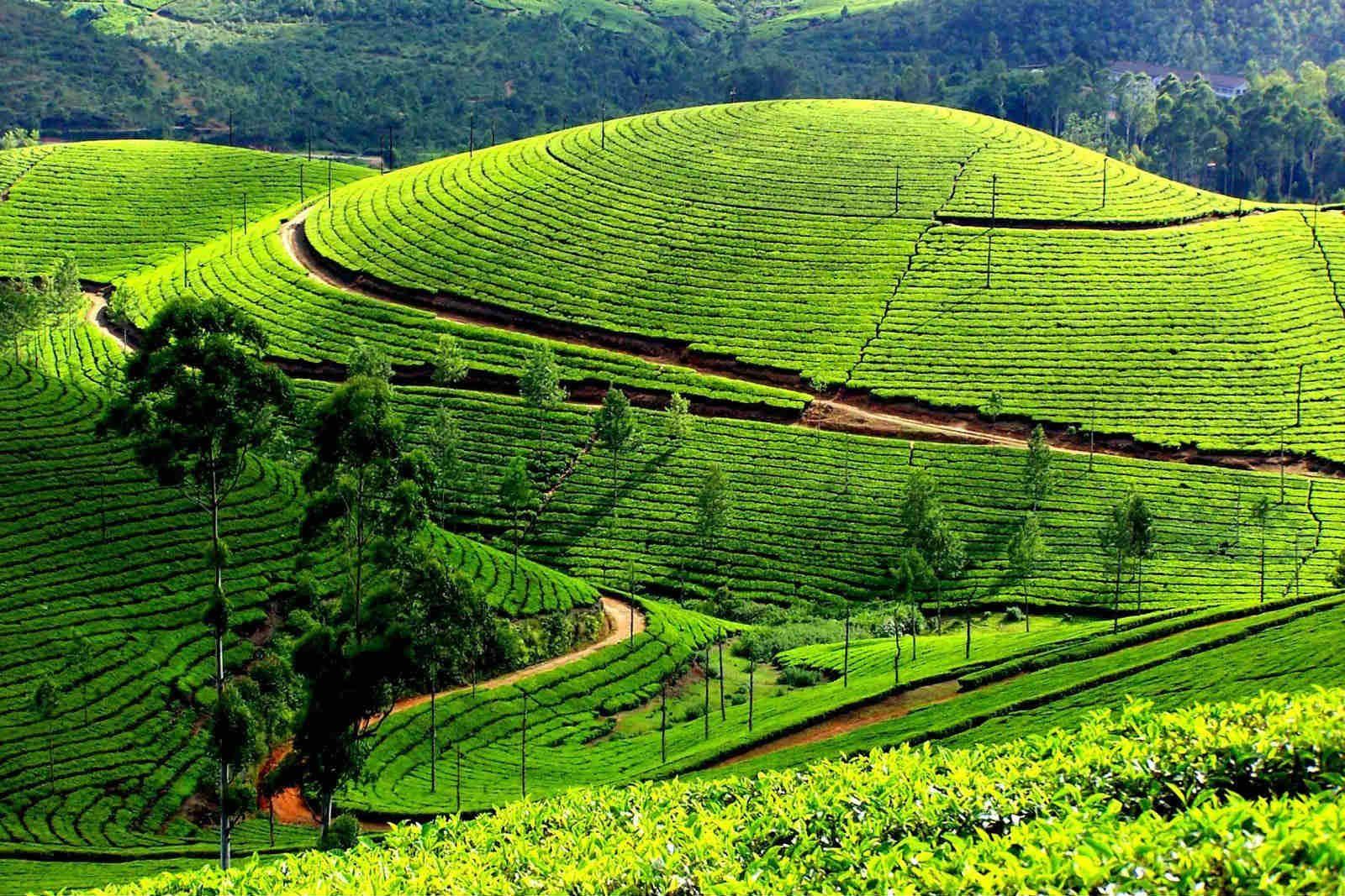 Kỳ 1: Mộc Châu, cao nguyên xanh bất tận…