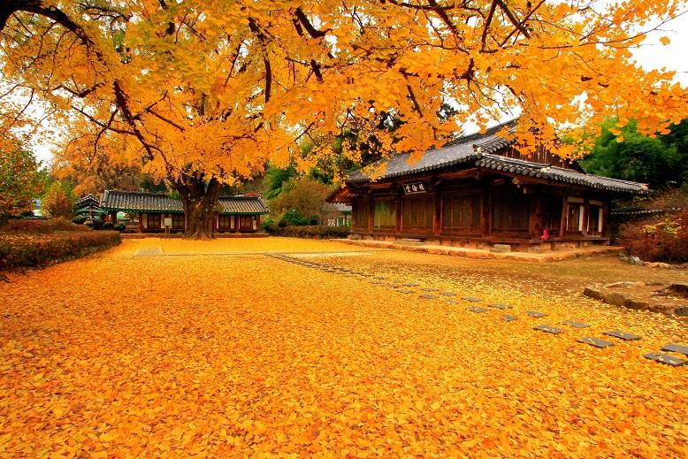 Phóng sự ảnh: Đẹp mê hồn mùa Thu vàng xứ Hàn Quốc
