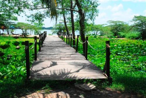 Vẻ đẹp hoang sơ của Cồn Ấu trên sông Hậu
