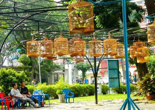 Cà phê chim Tao Đàn, thú vui tao nhã của người Sài Gòn