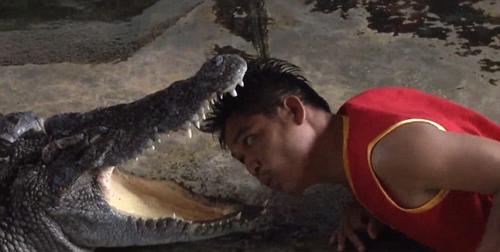 Đưa đầu vào miệng cá sấu để hút khách du lịch