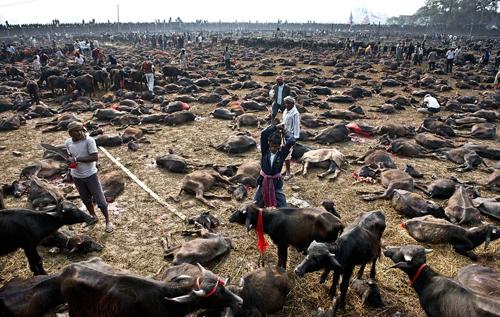 Lễ tế thần đẫm máu ở Nepal