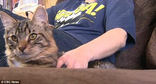 Chú mèo đầu tiên trong lịch sử được phẫu thuật xác định lại giới tính