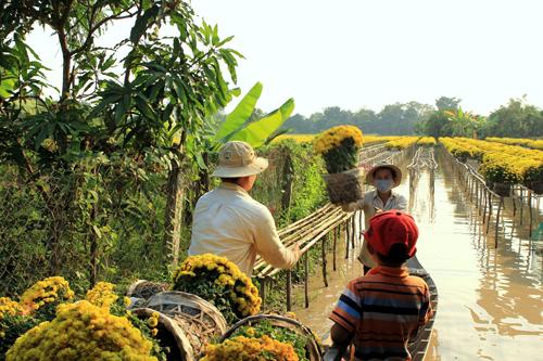 Mùa Tết trong các làng hoa nổi tiếng miền Tây