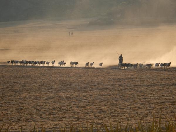 Năm con Dê, đến thăm những vùng đất có dê và cừu