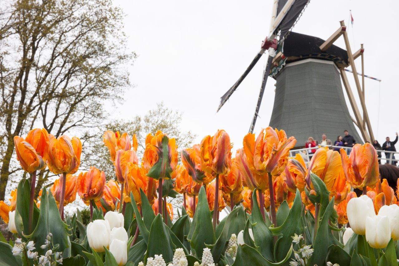 Ngao du hội hoa xuân trên khắp thế giới