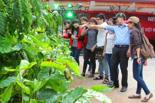 Tái hiện hào khí Tây Nguyên qua lễ hội cà phê tại thủ đô