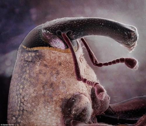 """Chân dung những """"sinh vật ngoài hành tinh"""" ẩn nấp ngay trong nhà"""