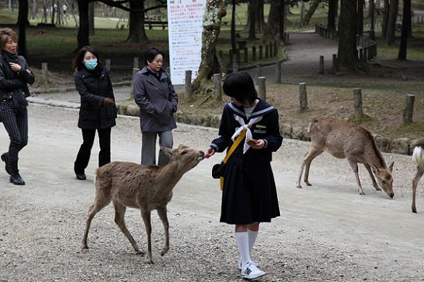 Khi nào thì bạn không nên đến Nhật?