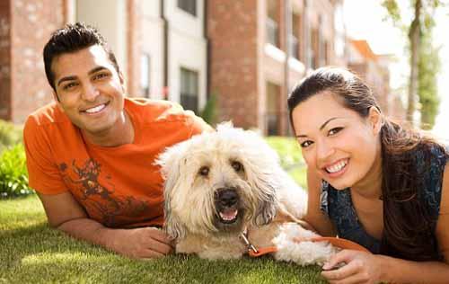 Phần lớn du khách nhớ chó cưng hơn người yêu khi đi chơi