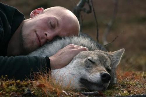 Thế giới 'Chạng Vạng' trong rừng Na Uy