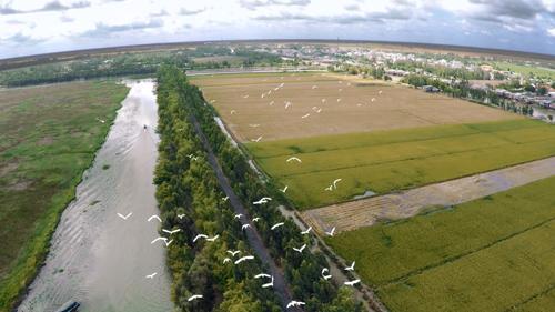 Tràm Chim được đầu tư 1,2 triệu USD để bảo tồn