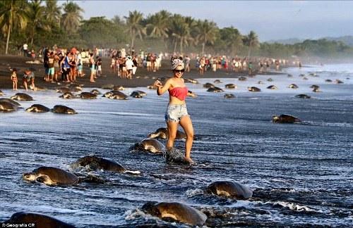 Du khách khiến rùa biển sợ không dám đẻ