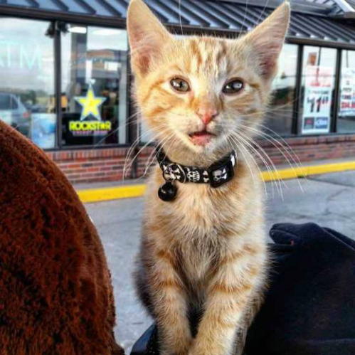 Người đàn ông cứu mèo con bị bỏng và đưa du lịch cùng mình
