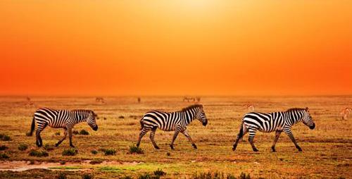 Những lầm tưởng của du khách về châu Phi