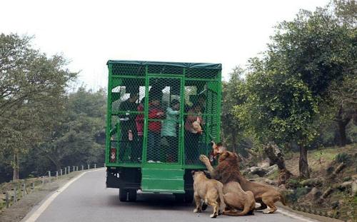 Những vụ hổ tấn công du khách trên thế giới