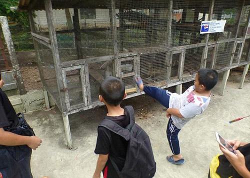 'Sở thú đến từ địa ngục' ở Malaysia