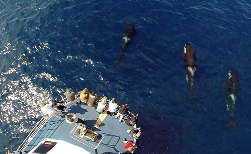 Tour du lịch bao vây bởi hàng trăm cá mập