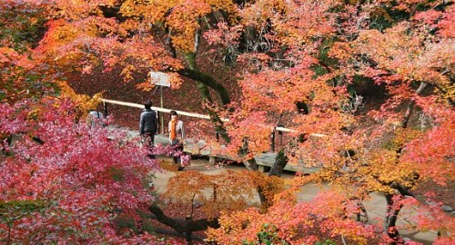 Khung cảnh rừng lá đỏ ngập tràn cố đô Kyoto