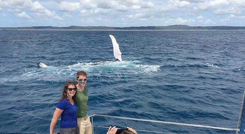Cá voi vẫy chào khách du lịch