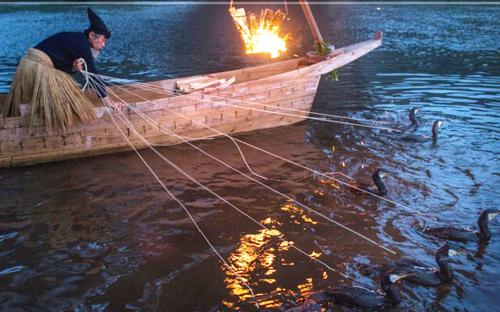 Nghệ thuật đánh cá bằng chim cốc và lửa của người Nhật