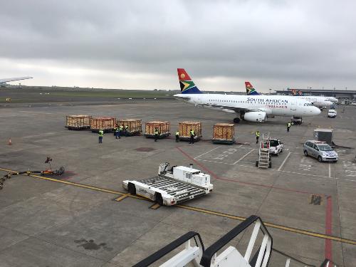 Ngựa vằn, linh dương cưỡi máy bay về Phú Quốc