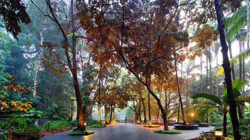 Vườn nhiệt đới duy nhất là di sản thế giới