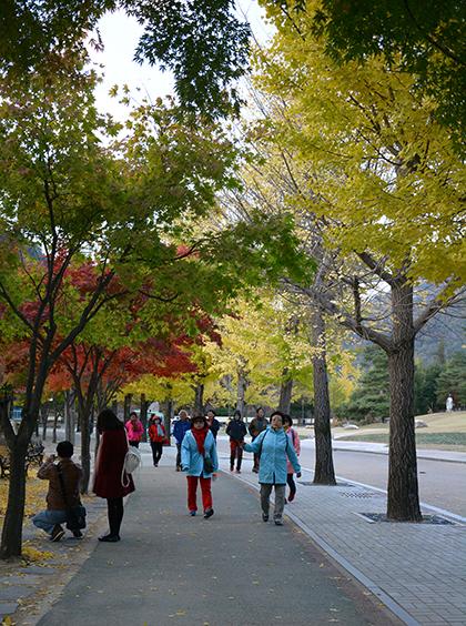 Những chuyến bay charter đi Hàn Quốc hút khách dịp Tết