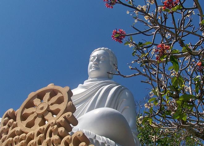 Hậu duệ cây Bồ Đề thiêng của Phật tổ trồng ở Vũng Tàu