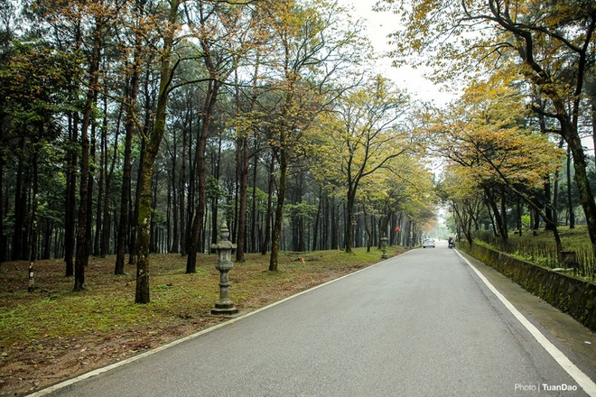 Mùa thay lá ở vườn quốc gia Ba Vì