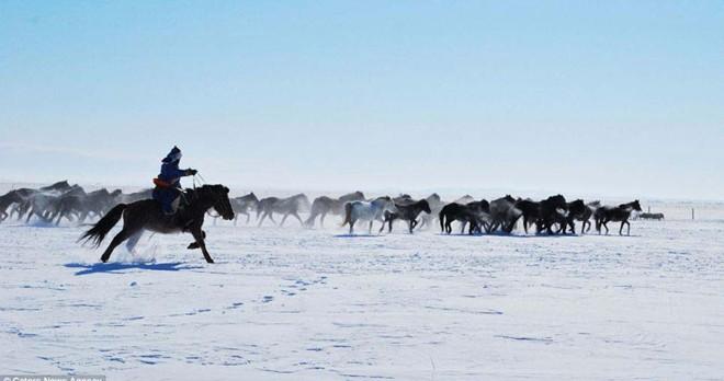Thảo nguyên Mông Cổ trắng tinh khôi khi mùa đồng đến
