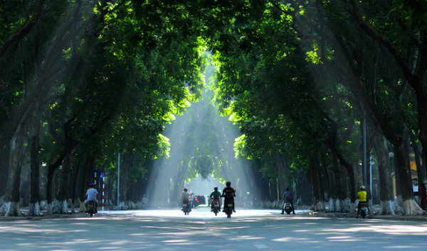 Xanh tươi, quyến rũ những hàng cây ở Hà Nội phố