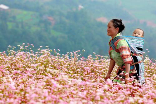 Lạc bước giữa những cánh đồng hoa đủ sắc màu