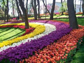 Du xuân ngắm hoa Tulip tại Thổ Nhĩ Kỳ