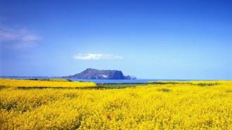 Những địa danh xinh đẹp bạn nên dừng chân tại Hàn Quốc